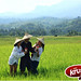 PLEASE VOTE!!! KFC  Krushers TOP 10 photo entry - Vietnam by magz_dc13