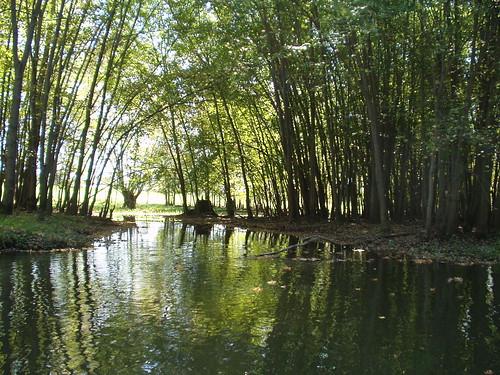 Lewis Creek - Ferrisburgh - LC_M03M02M01_20040927 - P1010072
