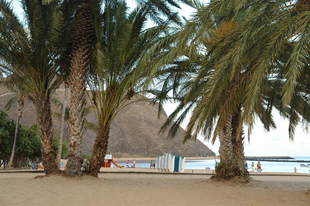 Qué hacer en Tenerife : Tenerife qué hacer en tenerife - 5433899421 4129de3a5f b - Qué hacer en Tenerife para tener unas vacaciones completas