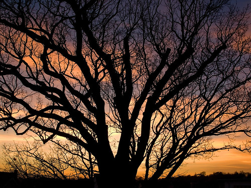 sunset england tree silhouette colours norwich eastanglia