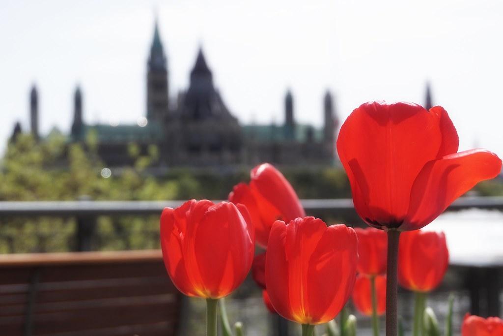 Happy Canada Day, Canada!