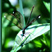 Small photo of Teel Dragonfly