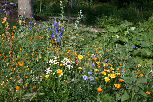 Allotment flowers