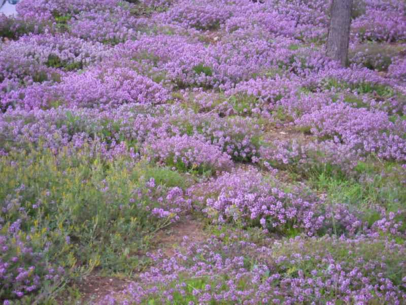 Jardineros en acción - Plantas cobertoras sustitutivas del césped
