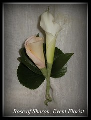 Boutonniere: miniature Calla Lily and peach Rose 'bud'