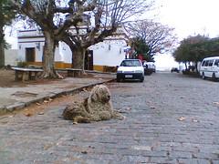 Dueño de la calle