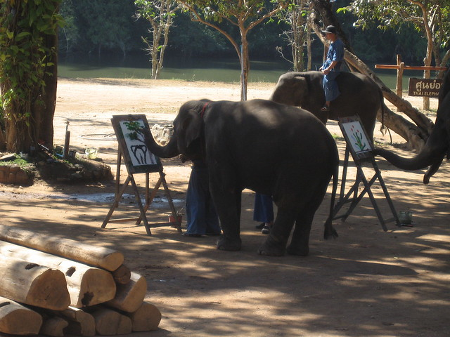 Elephant Conservation Centre, Lampang