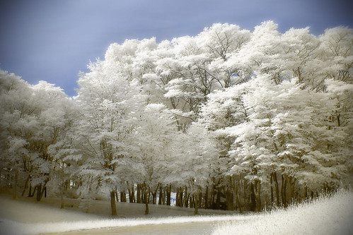 Silver frost of summer (Infrared)