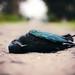 Fallen Avifauna by Jeremy Snell