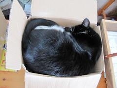 One cat ... one box ...