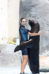 Sea lion and girl