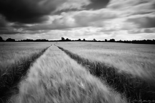 county ireland blackandwhite bw field barley track farming grain limerick nd110