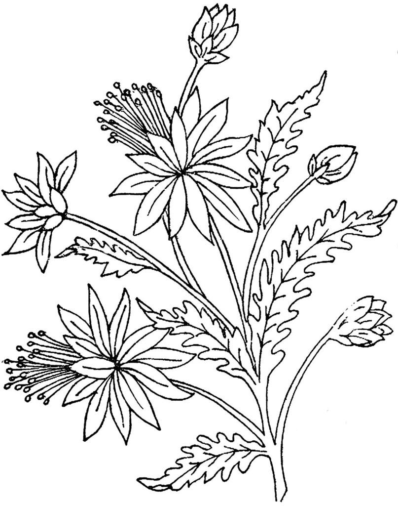 1886 Ingalls Flower
