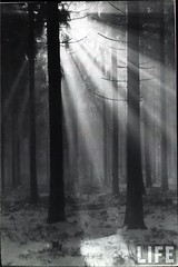 Scottish forest, sunlight, by E.O. Hoppe c.1925