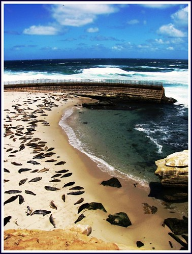 Seal Cove, La Jolla Shores, San Diego, California