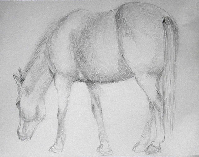 grazing horse sketch