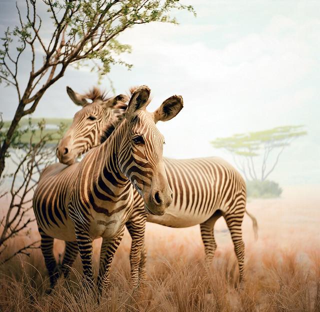 serengeti in san francisco by reflect/refract