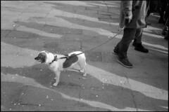 Venise et ses chiens