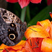 Butterfly and Orange Flower