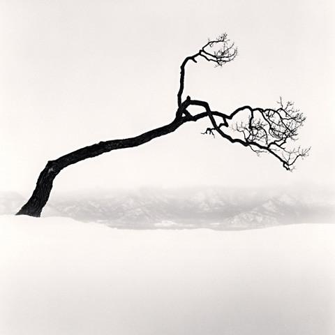 Kussharo Lake Tree, Study 9, Kotan, Hokkaido, by Michael Kenna 2009