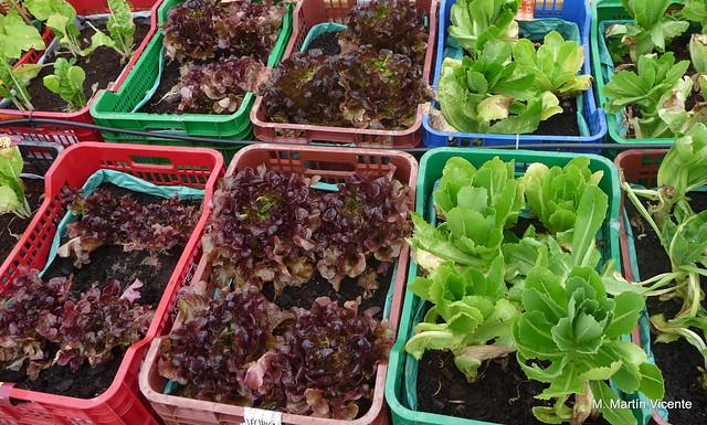 Huertos en macetas y jardineras planeta huerto for Preparar el huerto en invierno