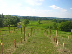 prairie, land lot, farm, field, soil, ranch, plain, meadow, pasture, rural area, grassland,
