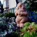 Dwarf´s garden