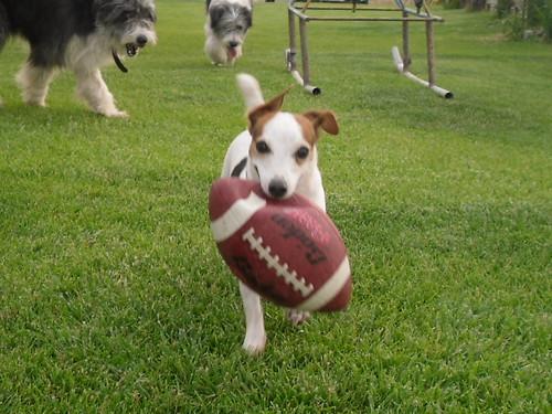 Doggy Football