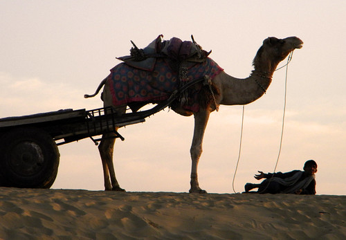 camel at the end of the day