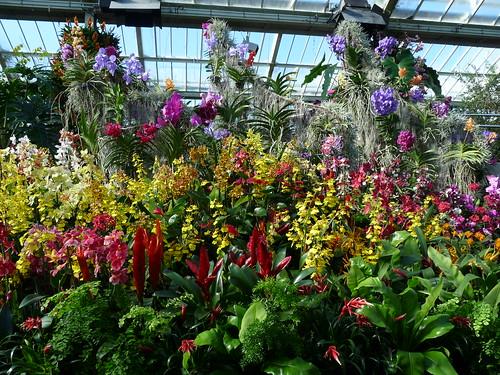 Orchid at Kew Gardens