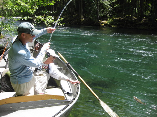 Mckenzie river fishing report the caddis fly oregon fly for Fishing report oregon