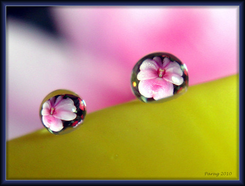 Raindrop refraction...