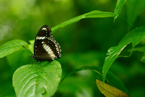 Butterfly - EOS300D EF 50mm f/1.8 II