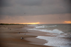 Sunrise and gulls