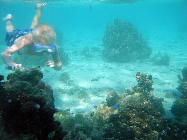 looking for morays