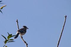 animal, branch, fauna, bird migration, bird,