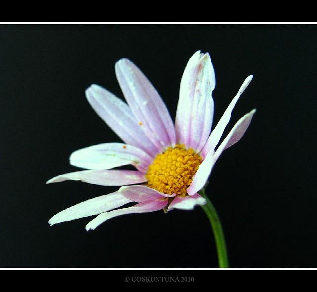 Flower Portrait.