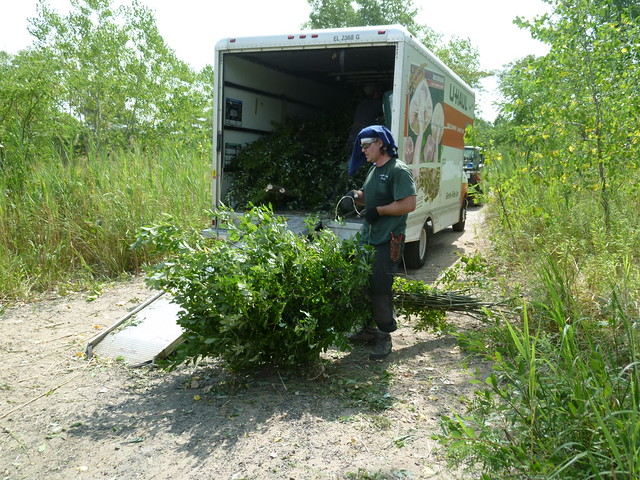 BBG arborist Chris Roddick loads harvested saplings onto a truck for transport to BBG. Photo by Elizabeth Peters.
