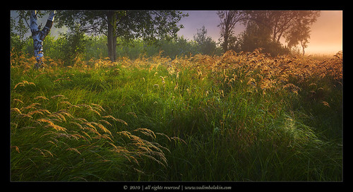 morning light nature grass fog sunrise weed herb