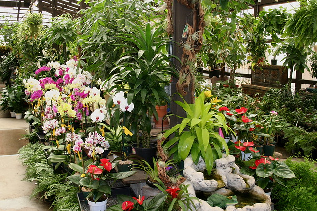 Indoor Plant Display Flickr Photo Sharing