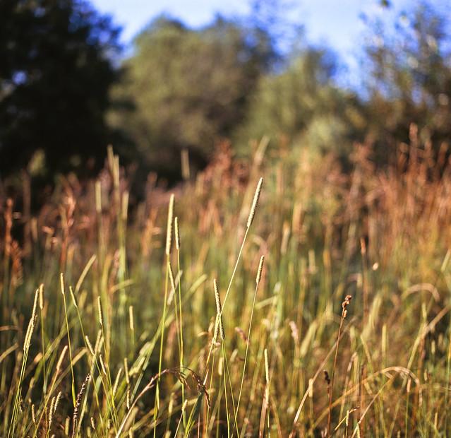 L'herbe longue