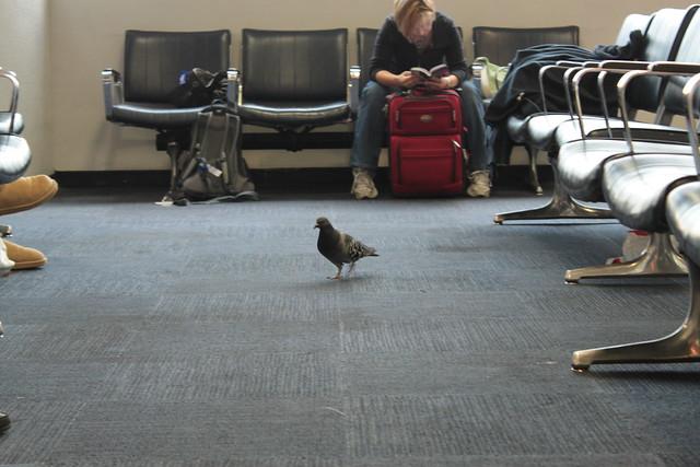 Header of Air Traveller
