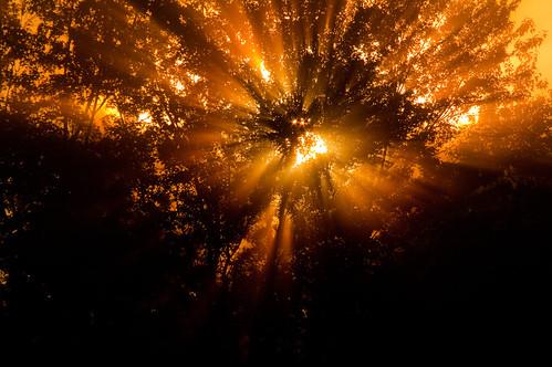 morning sun sunrise soleil branches explore ciel arbres québec matin leverdesoleil beauce feuillage 55300mm pentaxk7
