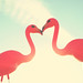 flamingo love {7 of 365}  {Explored} by RebeccaVC1
