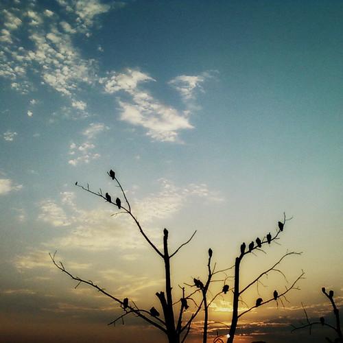 cameraphone ohio sunrise cellphone turkeyvultures dayton buzzards autumnalequinox samsungschu640