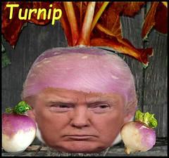 Turnip3