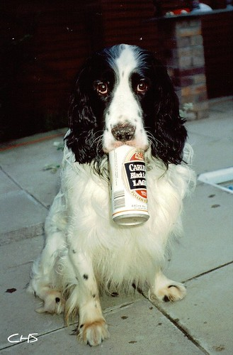 "Oldie, 35mm - ""Bet he drinks Carling Black Label!"" May 1990 by Stocker Images"