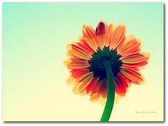 Quinta Flower {Explored}