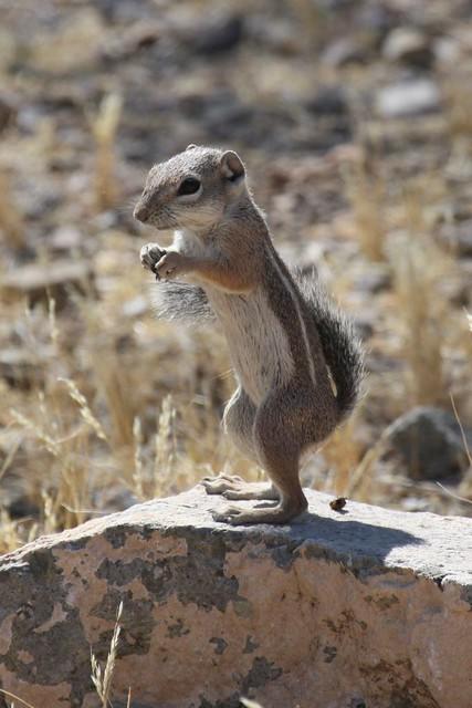 Sassy Squirrel