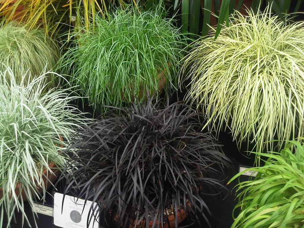 plante fleurie en pot